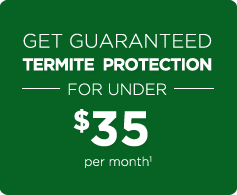 Get Guaranteed Termite Protection for only $23.25