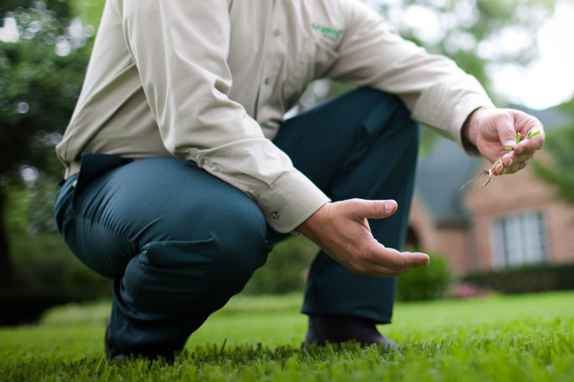 Put TruGreen expertise to work for your lawn.